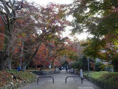 圓光寺の前に寄った神社の様子。 地元の人しかいない。しかし朝一の神社仏閣は最高です。空気も澄んで雰囲気良し、参道の紅葉も素敵。  紅葉は終わり頃でけっこう散っており、散らずに残っているものも茶色だったりするけど。  京都楽しいな! 私は京都好き補正がガッツリかかっています。この先紅葉がキレイかどうかは各自ご判断ください