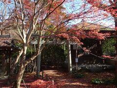 入口の門をくぐった一帯は、落ちた紅葉で埋まっていました。  凄いな、午後の日差しのおかげで余計に美しい。紅葉の絨毯、ふかふか紅葉ベッドです。
