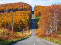 紅葉の時期の就実の丘です!! どこから写真撮るのが1番良いのか、車で近くまで行ったり、戻ってきたりして何枚か撮りましたが、結局坂道の迫力を1番感じられるのはこの場所からだったような気がします。