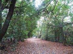 雑木林の落葉でフッカフカの山道。