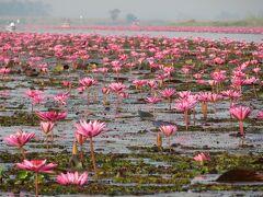 別の場所に移動し、さらに密集している場所へ  花の咲いている場所と、水路の場所が分かりやすい