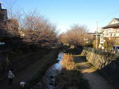 御来光を眺めた後、武蔵野の森公園から野川沿いを遡った所に在る、貫井神社に初詣に向かいます