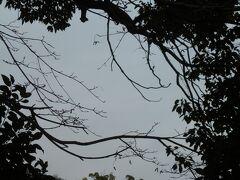 土手道の木々の間から平等院の屋根が見える。