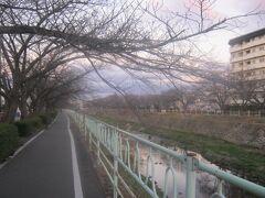 昨年はコロナ禍のため、令和最初の桜を眺めることが出来なかった香流川。  今年は果たしてどうかな…。