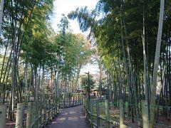 すずめのお宿緑地公園には竹林があります