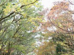 「下鴨神社」から南へ向かうと、「糺の森」 森というより、両側に木々が並ぶ散歩道のようで、晩秋の落ち葉でいっぱい。 この「糺の森」の先に、訪れて初めて知る神社が2か所ありました。