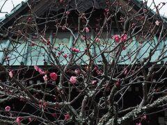 花の寺として名高い古刹です。  ここの紅梅はちょっと早め(*^^*)