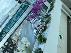 那覇空港に到着 胡蝶蘭が出迎えてくれます