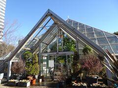 軌道修正し多摩中央公園内にある「グリーンライブセンター」に到着。 多摩市と恵泉女学園が運営する植物園です。 ピラミッドギャラリーと名が付く温室もあり。