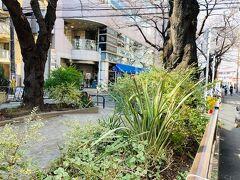 呑川緑道。 呑川は、世田谷区桜新町付近を基点とし、駒沢、都立大、大田区に入り石川町、雪ヶ谷、久が原、池上、蒲田を流れ、糀谷を抜けて東京湾に注ぐ2級河川です。 H10年から7年ほど大田区石川台に住んでいましたので懐かしい。 桜新町から駒沢通りまでは親水区間で、駒沢の日本体育大学の正門付近からは水の流れは地下に入る暗渠区間となっていて、この辺りも暗渠の上部が遊歩道になっています。 桜の名所で人気らしいです。