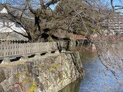 ホテルを出てから、歴史好きの主人のリクエストで小田原城へ。桜の咲く時期にも来てみたいな。