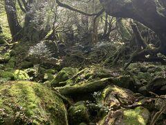 「苔むす森」のあたりまでやってきました。このような苔の所がたくさん。普通に木の幹も苔に覆われています。