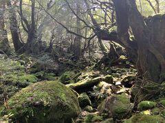 再び「苔むす森」まで戻ってきました。やっぱり「もののけ姫」の世界ですよねえ。
