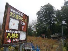 八村杉という国指定天然記念物があるらしい 行ってみましょうね