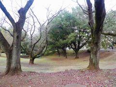 米軍のジョンソン基地は自衛隊の入間基地となりましたが 一部は狭山稲荷山公園となりました。 春には桜がきれいな公園です。