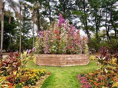 15:37のバスで帰ることに決め、それまでの時間青島の隣にある植物園を見学。