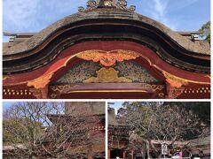 本殿の前には有名な飛梅と皇后の梅が。
