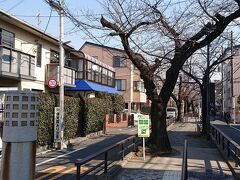 立会川緑道は、車道と分離されているので歩きやすい