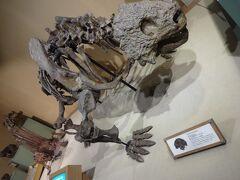 お隣の建物、自然史博物館です。  いきなり恐竜の恐竜のガイコツ!