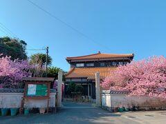 建物の外観は、あまりお寺っぽくはナイですが、確かに濃いピンク色の河津桜がめちゃくちゃキレイに咲いてます!