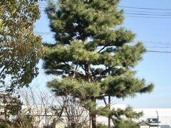 上手く撮影できなかった駒掛けの松を撮影してから出発する。