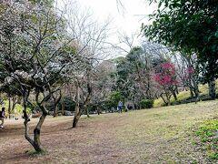 更に進み、児童遊園地に到着しました。 梅林ではないですが、そこかしこで梅が咲いています。