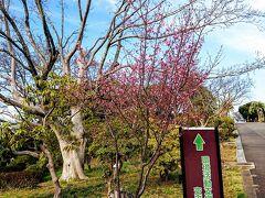 続いてやってきたのは、児童遊園地に隣接している、環境支援センターです。 早咲きの桜がちょこちょこあります。