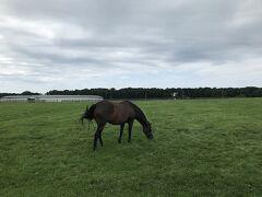 門別競馬場のお向かいの牧場にいた馬人懐っこい。