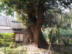 【東京都庭園美術館】 大きな樹木と茶室