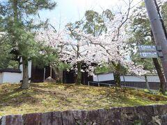 山上と同様  桜が見事です