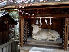 道明寺の撫で牛は白牛さんです    って言うか、いつも閉まってたので扉が開いてるの初めて!     こんなご時世なので心の中で撫でました