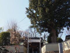 荏田真福寺へも寄り道。