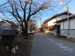 小幡の城下町の桜並木