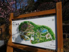 池上本門寺から徒歩10分程の距離に「池上梅園」があるので、訪れました。 大田区の花「梅」が30種類余植えられています。