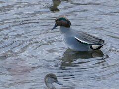 川には水鳥が