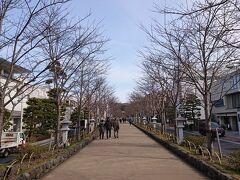 「鶴岡八幡宮 二の鳥居」を通り、「若宮大路」を歩きます。きれいに一直線で、よく整備されてます。
