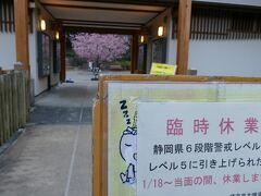 見事な桜が見えまずが 残念ながら今は臨時休業中