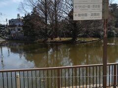 白鳥池。白鳥はいませんが、 散歩中の犬とよくすれ違います。  昭和レトロな遊園地や動物園も好きだけど、 今日はパスします。