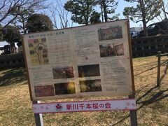 道の駅を出ました。 八千代新川千本桜の案内板。