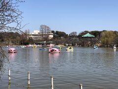 不忍通りを歩きます。  右手には『上野恩賜公園』の「不忍池」。 去年スワンボートに乗りました。