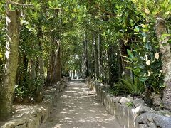 美ら海水族館近くにある「備瀬のフクギ並木」を散策。緑に囲まれ癒されますねえ。