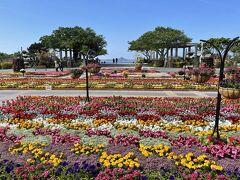 いよいよ、美ら海水族館です。周囲の公園は花に包まれています。米軍関係でしょうか、意外にも外国の方がたくさんいますね。