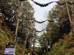 もみの木のガーラント的な? だけど、この天気だとまるでハロウィンのコウモリに見えちゃう。 11月も後半だけどね。