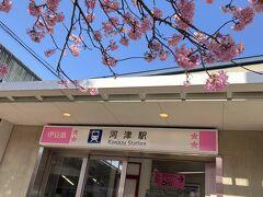 河津駅かわいいです 駅前にも河津桜があって、桜と駅 最初から素敵☆