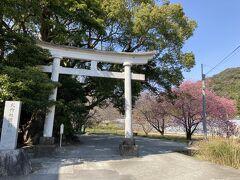 川津来宮神社 鳥居と桜 河津はどこに行っても桜がありますね 素敵な街ですね