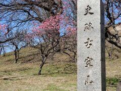 登れる古墳にも再訪 先週は蕾だった梅 開花してました
