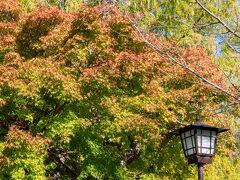 まずは、紅葉の名所、吉香公園へ。 …なのですが、やはりまだ早かったか。 少しだけ色づいたところがちらほらある程度。 (紅葉シーズンは11月中旬で、2週間ほど早いです)