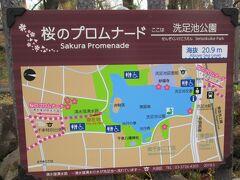 桜のプロムナード 案内サイン 洗足池公園