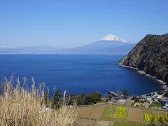 更に車で移動して煌めきの丘へ 毎年この時期現れる、菜の花の「井田」と富士山。