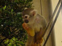 ホテルに戻りまた猿を見てから部屋に帰りました。